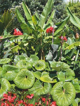 Designing with Plants Sandra Batley garden designer