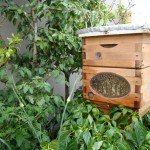 Including bee hives in strategic places in your landscapes can improve your crop production as well as create interest and a talking point!