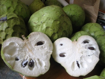 Cherimoyas Cousin Of The Custard Apple Info And Recipe
