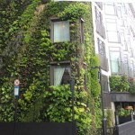 Green Wall for Auckland City gets the go ahead