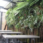 "Kiwi classic ""Ponga"" forms living wall"