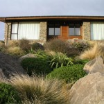 Subalpine beauty in the Mackenzie Basin – a Findaplant.co.nz article