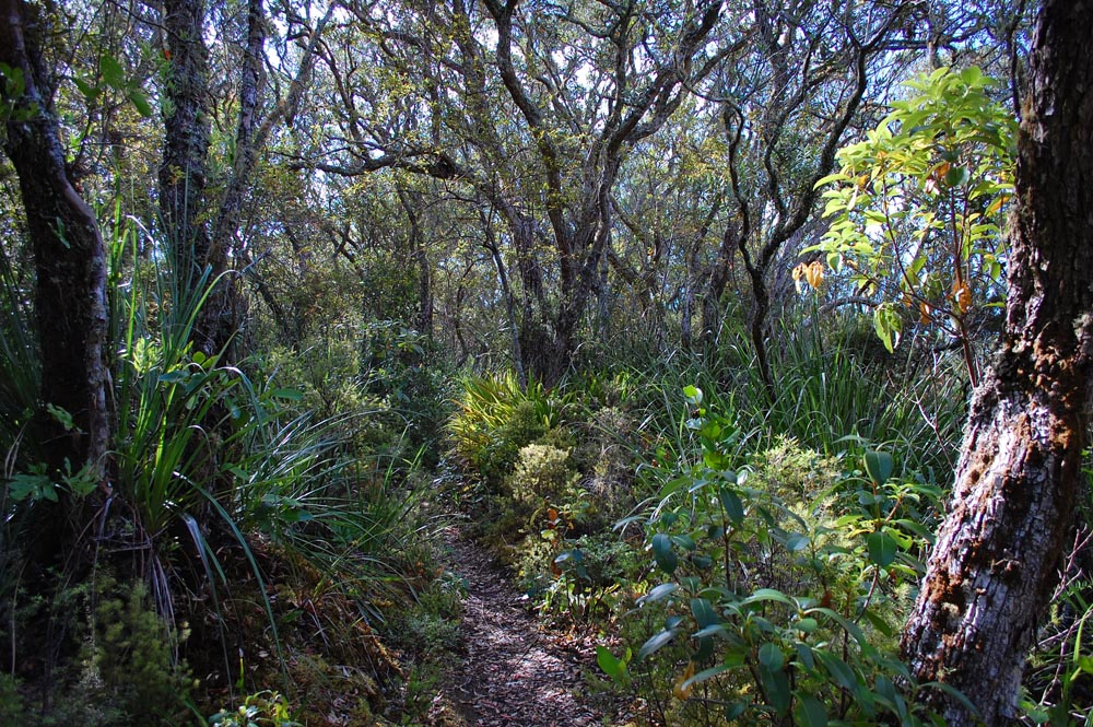 3. Complex layering in established coastal forest