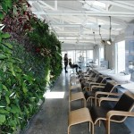 Greenwall installed in The Department Store