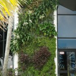 Natural Habitats  Green Wall has grown – new images!